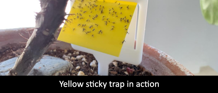Yellow Sticky Traps for Gnats