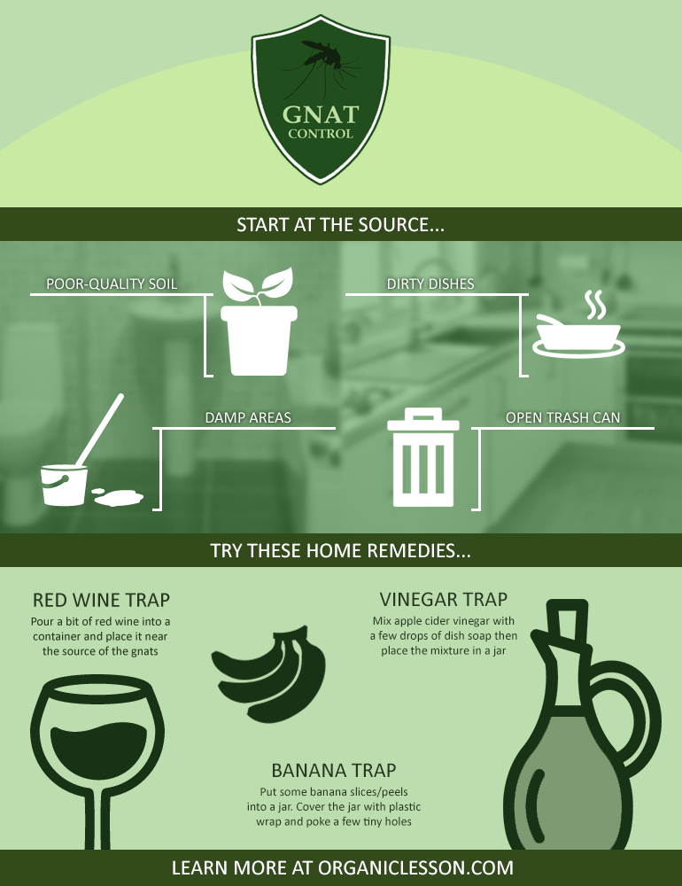 Get Rid of Gnats Infographic