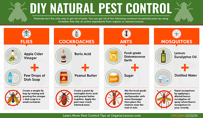 Pest Control Infographic